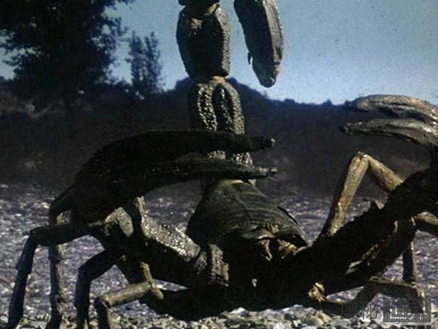 陆地杀手蝎