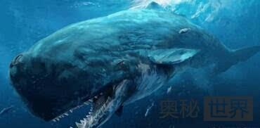梅尔维尔鲸
