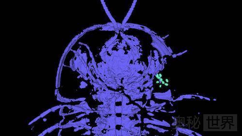 科学家发现古老三叶虫生殖器在头部