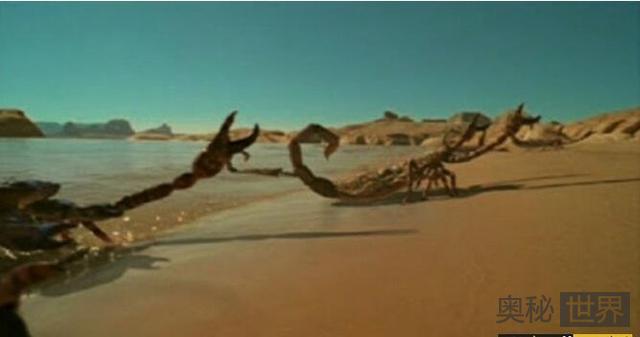 布龙度蝎子