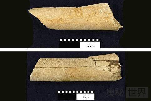 埃塞俄比亚发现340万年前切肉刀