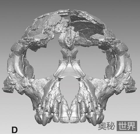 最古老人类祖先骨架化石