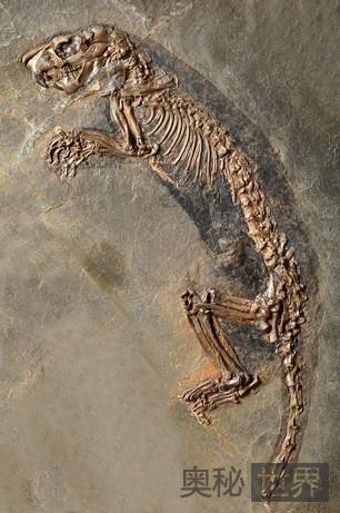 """新发现的化石 包括""""优雅鼠鼬""""和""""宝石虫""""在内"""