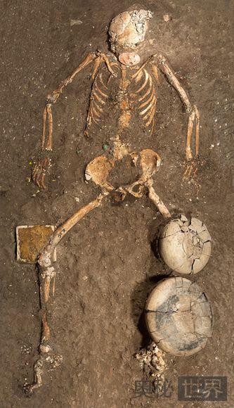 女性精英骸骨