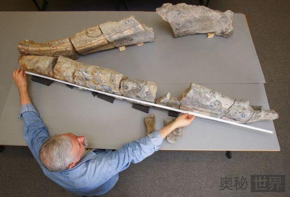 了不起的化石收集者