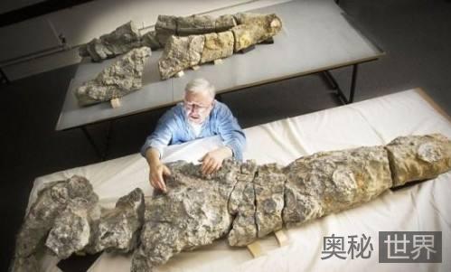 考古发现8500万岁南极蛇颈龙化石