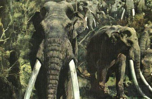 北京怀柔发现古菱齿象化石