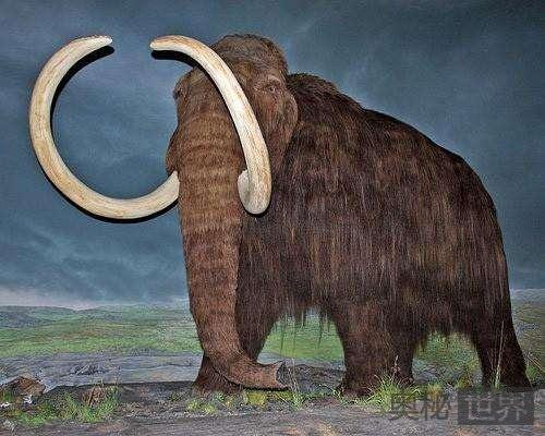 俄罗斯发现完好的长毛象骨骼