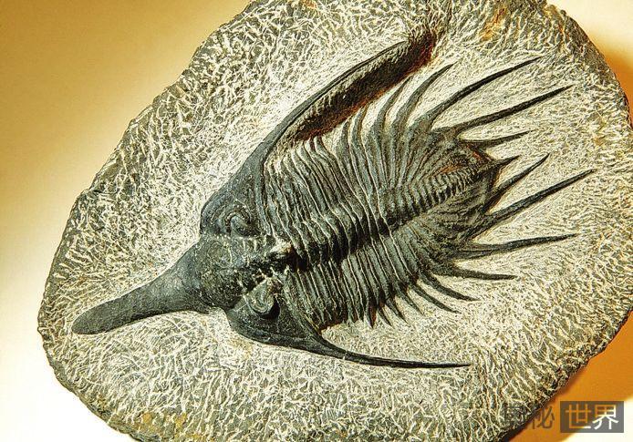 从三叶虫化石看几亿年前的求偶竞争