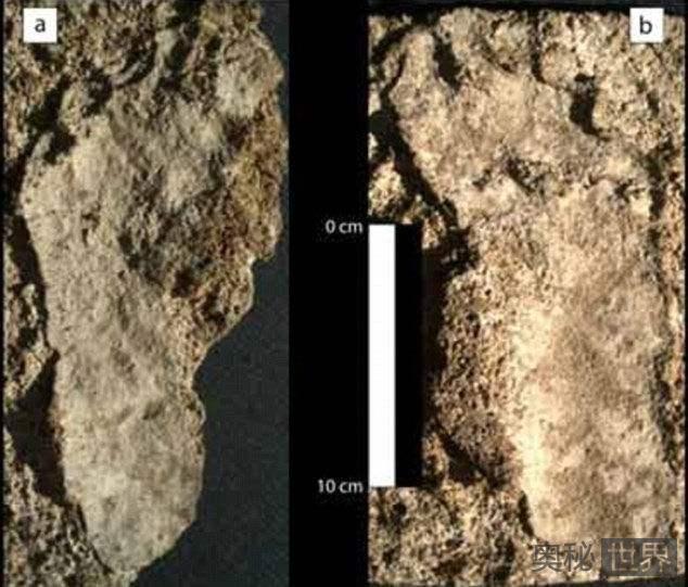 在墨西哥发现4万年前人类足印