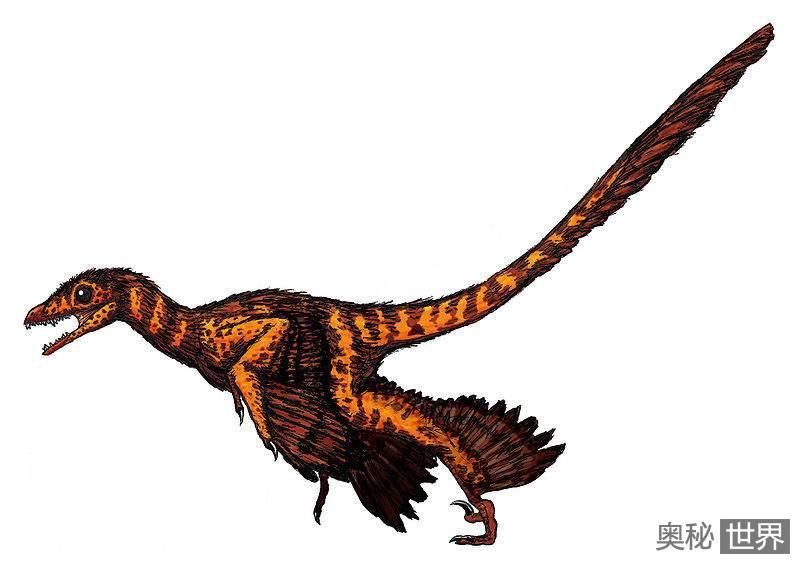 千禧中国鸟龙:第一种有毒恐龙