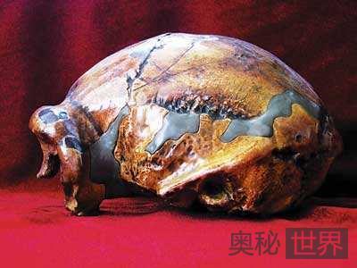 北京人头盖骨可能在日本皇宫地下