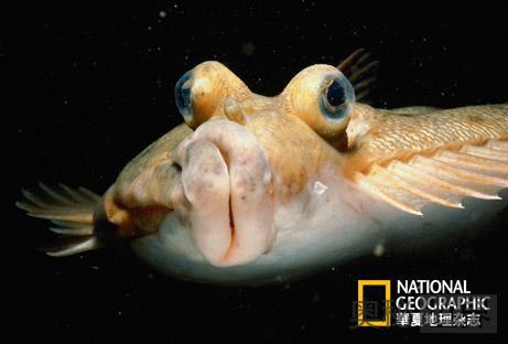 奇鱼的发现反驳了智慧设计论