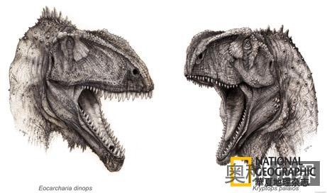 发现新奇异恐龙