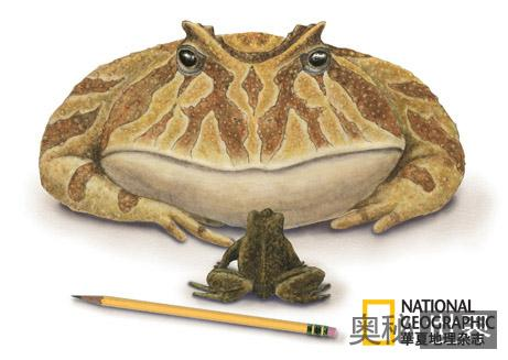 巨型'井底之蛙'化石