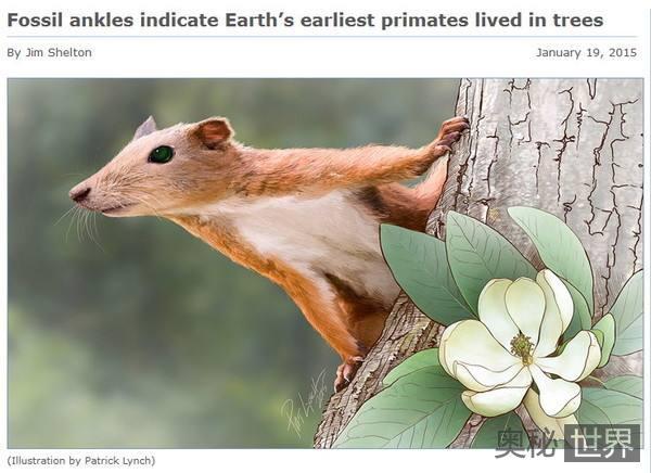 普尔加托里猴:人类祖先像松鼠