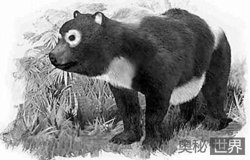 大熊猫起源于西班牙