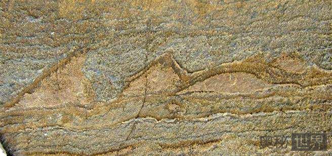 日本发现30亿年前微生物化石群