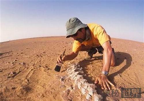 2.5亿年前远古鳄鱼化石