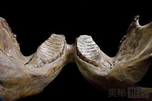 美国停车场挖掘发现许多史前动物骨骼