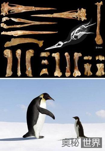 世界上十大最奇特的化石