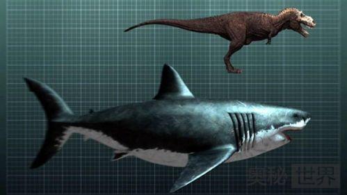 史前第一可怕巨兽,巨齿鲨体长20米能一口咬断鲸鱼