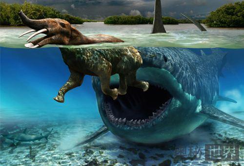 巨齿鲨生死谜