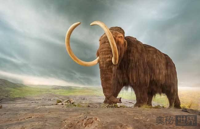 猛犸象是怎么灭绝的?