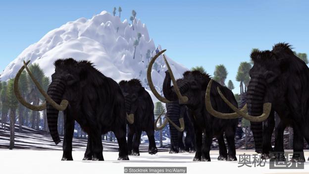 中国专家:猛犸象完全复活是不可能的