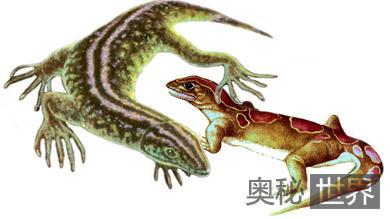考古发现地球上首批爬行动物化石