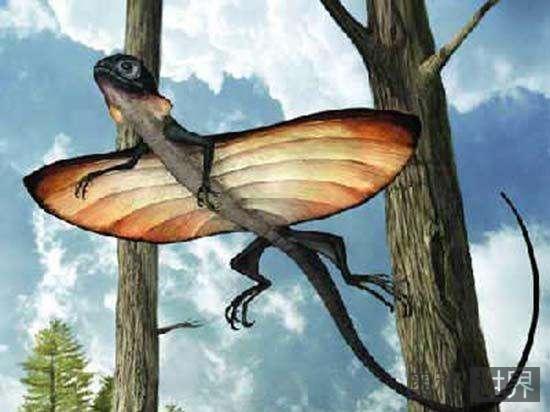 飞蜥蜴:最古老的飞行动物