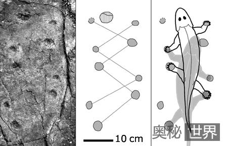 波兰发现最古老海洋生物登陆脚印