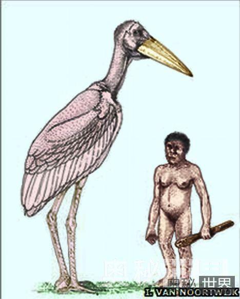 印尼发现史前巨型秃鹳化石