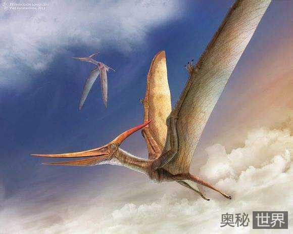 史前超巨型翼龙可不间断飞行上万公里