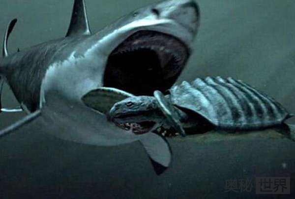 巨齿鲨:体型最大的食肉动物