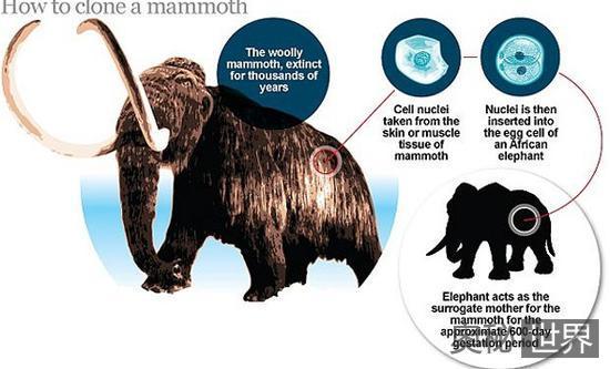 """揭秘科学家们如何""""复活""""猛犸象"""