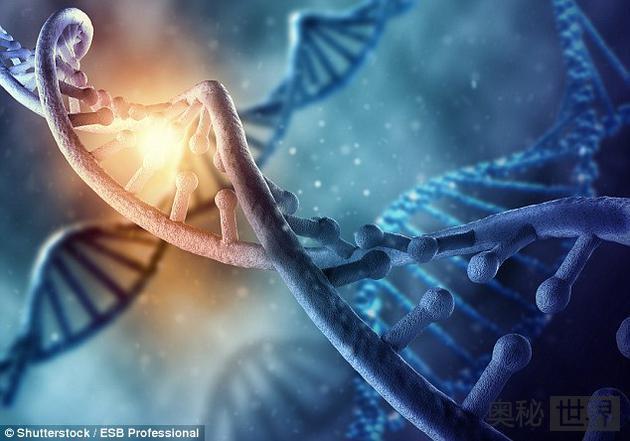 科学家重建恐龙DNA结构