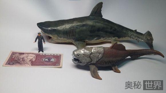 邓氏鱼和巨齿鲨,谁是真正的海洋霸主?
