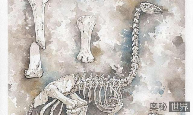 象鸟:谁杀死了有史以来最大的鸟