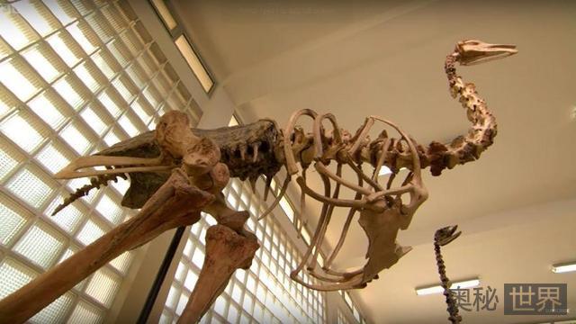 象鸟:史上第一巨鸟,一条腿就够你吃上一个月