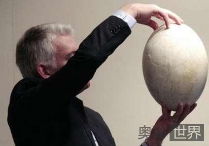 世界上最大的蛋,马达加斯加象鸟产的蛋