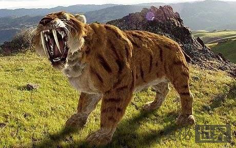 异剑齿虎,比剑齿虎更凶残的史前巨兽