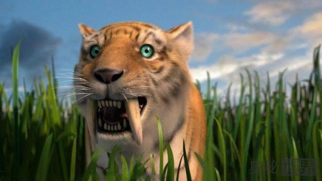 剑齿虎是由于人类的猎杀而灭绝的吗?