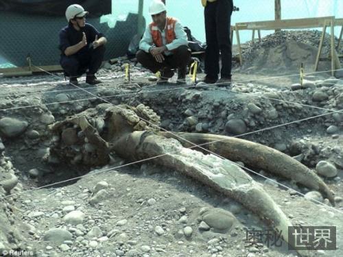 智利发现200万年前乳齿象化石