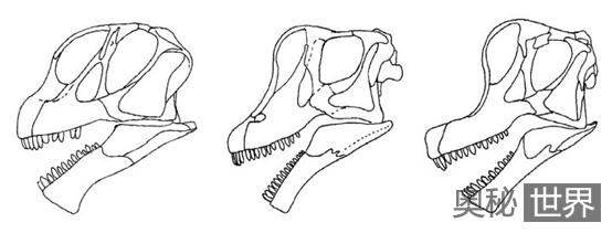 腕龙、梁龙、马门溪龙等恐龙的区别