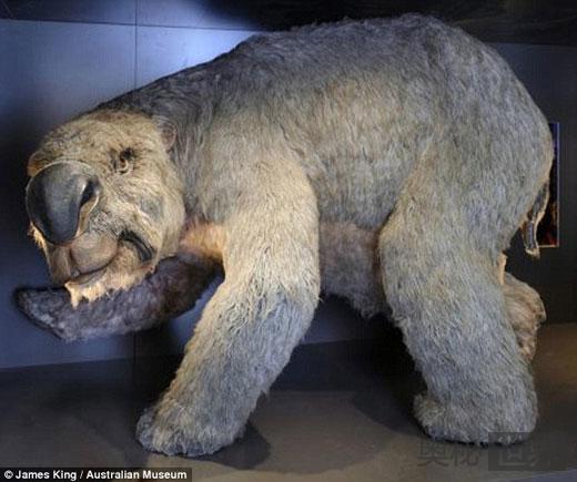 澳大利亚发现史前巨兽双门齿兽的完整骨骼