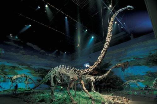 脖子最长的恐龙:马门溪龙