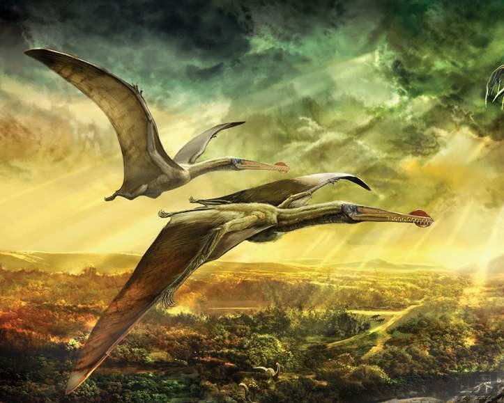 翼龙究竟是卵生的还是胎生的?
