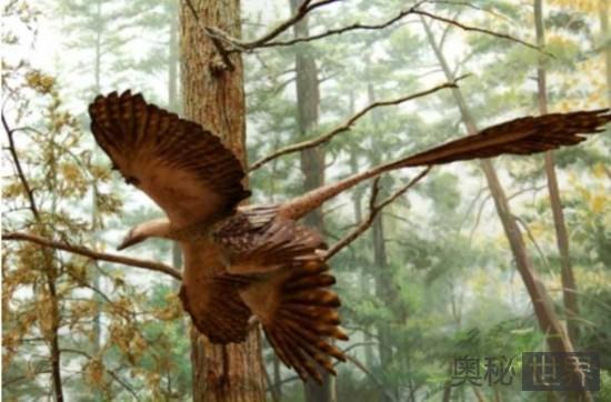 始祖鸟(唯一的鸟类恐龙)