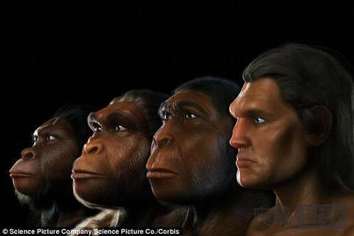 南方古猿是人还是猿?